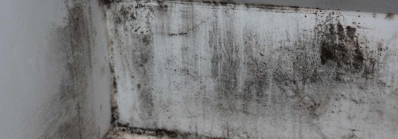 Come togliere la muffa dai muri ✔
